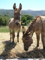 20060603022800-burro2.jpg