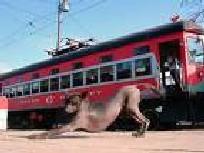 20061015141454-tren.jpg