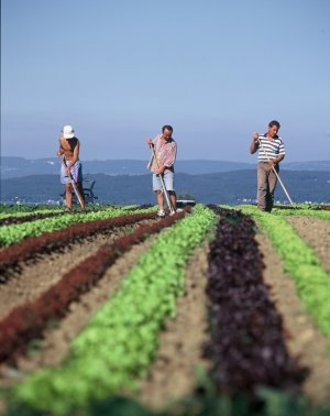 20120520001257-agricultura1.jpg