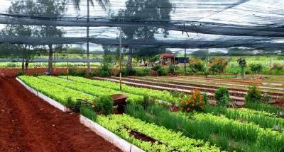 20140317221057-agricultura-10-cuba-foto-abelrojas.jpg