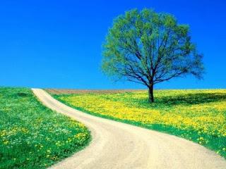 20130907184852-camino-de-la-felicidad.jpg